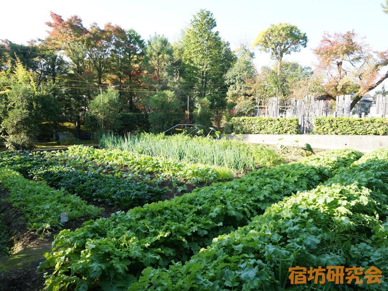 妙心寺東林院の畑