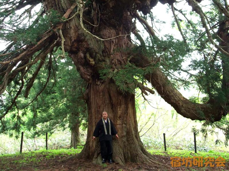 湯殿山の皇壇杉