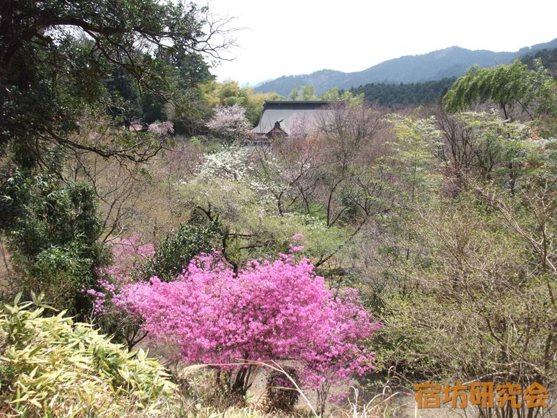 花いっぱいの竹寺境内