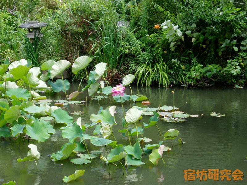 光明寺の庭園の蓮