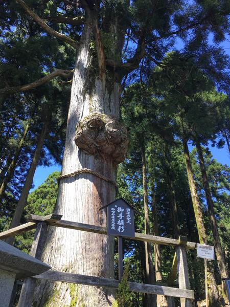 日蓮聖人お手植え杉