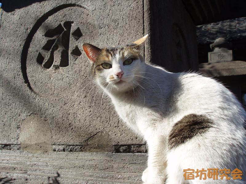 安養院の猫