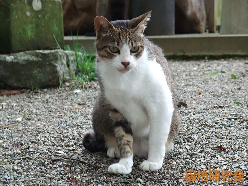 太江寺『猫』
