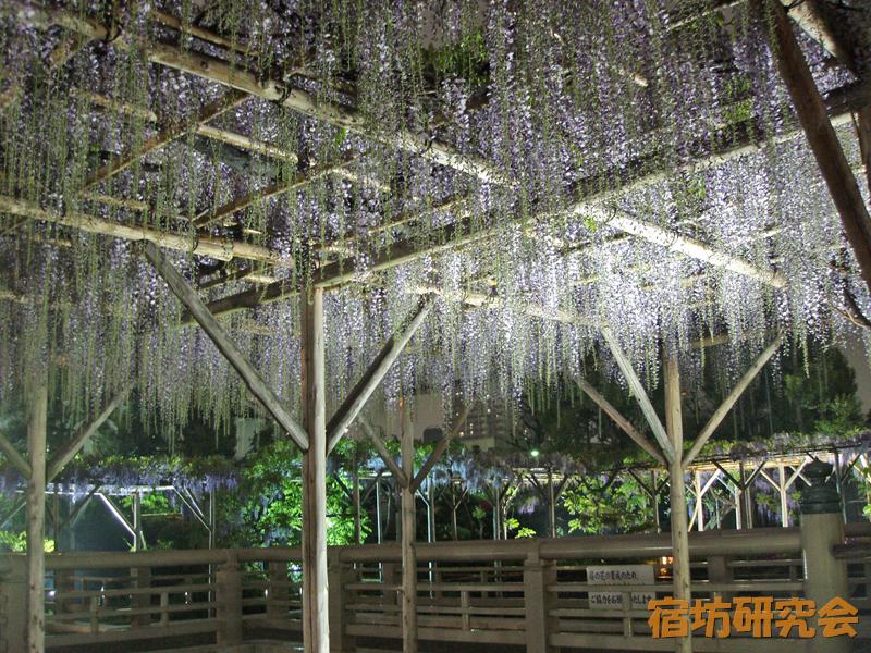 亀戸天神社『藤の花ライトアップ』