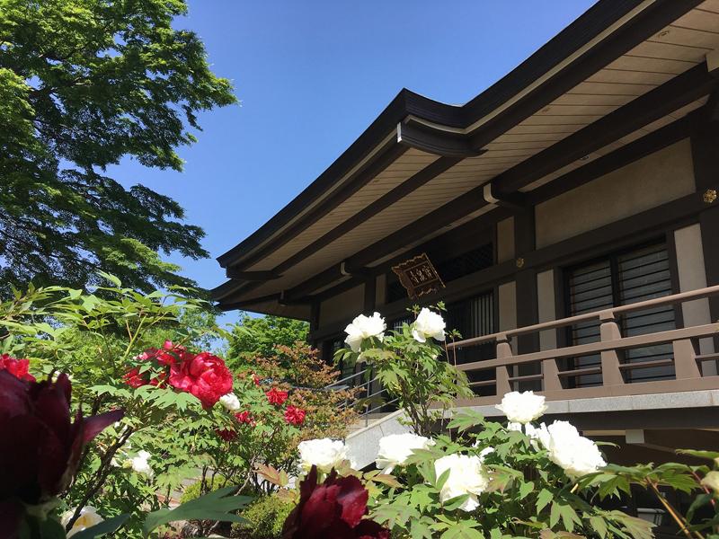 宝泉寺の牡丹