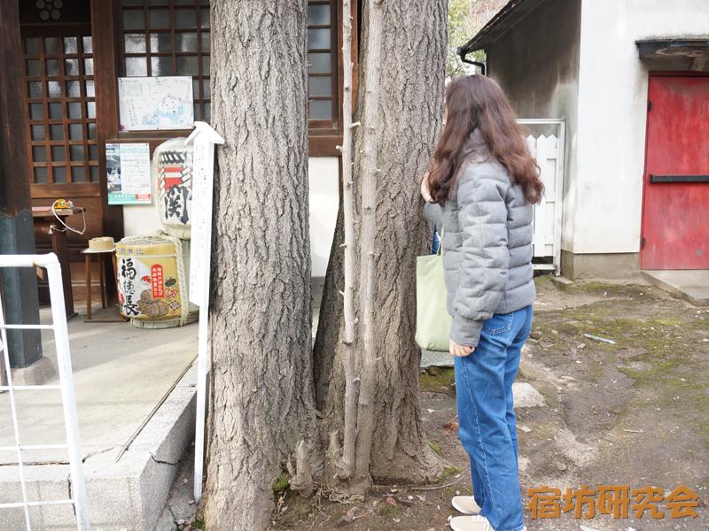 柳原天神社の夫婦いちょう