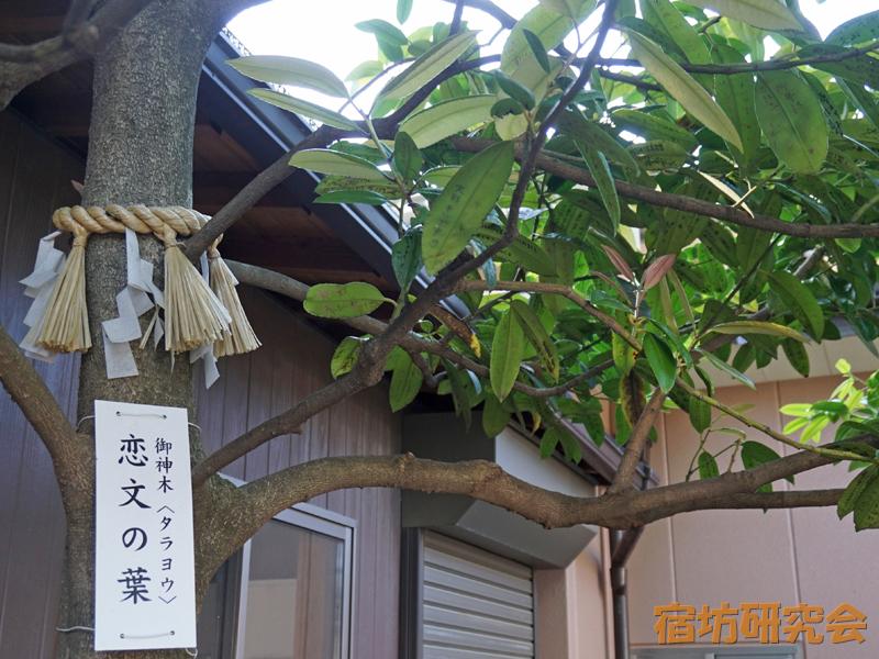 川越八幡宮の恋文の木