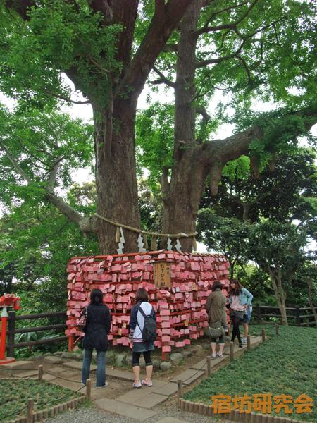 江ノ島神社のむすびの樹