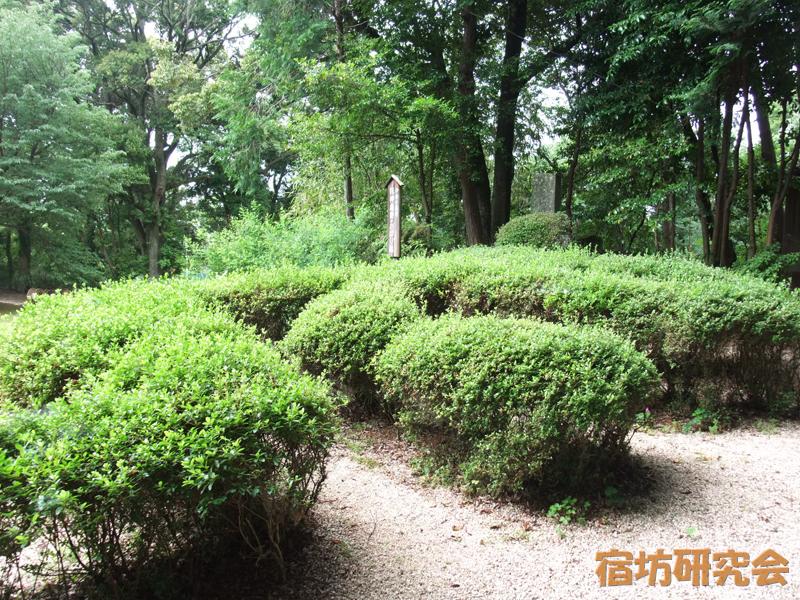 松尾観音寺の龍神庭園
