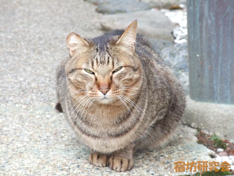 御髪神社の猫