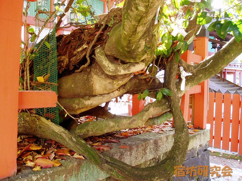 春日大社 風宮神社の七種寄木