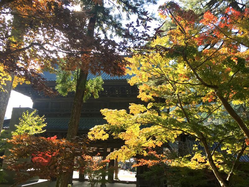身延山三門周辺の紅葉