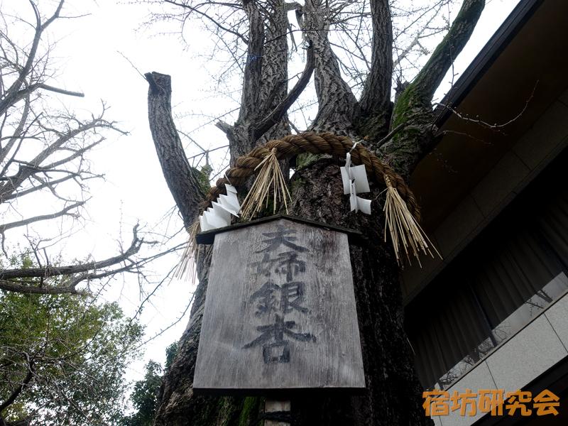 玉造稲荷神社の夫婦銀杏