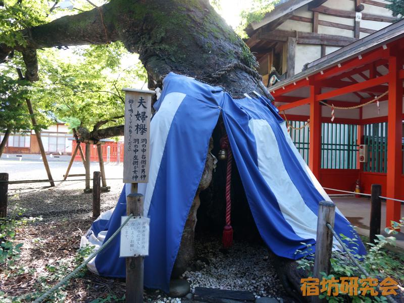 生島足島神社の夫婦欅
