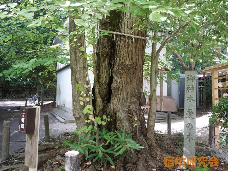 梨木神社の愛の木